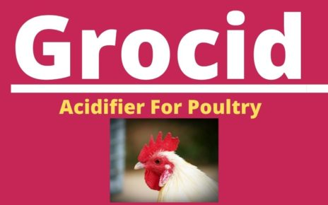 Acidifier for poultry
