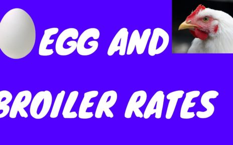 Today Egg and Broiler Price.