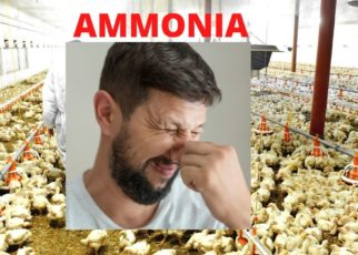 Ammonia Treatment in Poultry