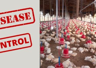 disease control tips in Poultry