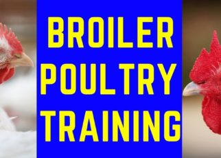 Broiler Poultry training.