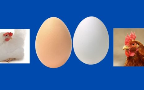 Difference Between Organic and Normal Egg.